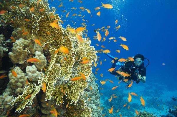 Unterwasserwelt, bei El Gouna, Rotes Meer, Aegypten