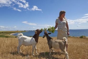 "\""Ziegen-Gitte\"", Gitte Soerensen, Insel Avernako"