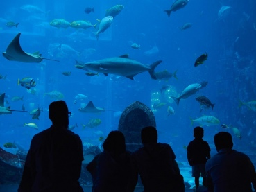Meeresaquarium, Lost Chambres Aquarium, Hotel Atlantis The Palm Dubai, Dubai, Vereinigte Arabische Emirate