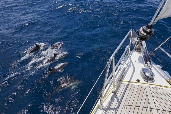 Delfine, Segelboot,Typ: Bavaria 46 Cruiser, Atlantik, Atlantischer Ozean, Lanzarote, Kanarische Inseln, Spanien