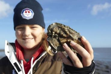 Auster aus Wattenmeer, Ostseite Nordseeinsel Romo (Roemoe), Daenemark