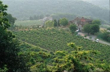 Weingut der Toskana